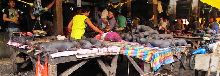 Kunjungan ke Pasar <b>Tomohon</b>