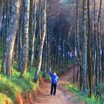 Melawat Pagi di <b>Hutan</b> Pinus