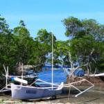 Menyisir Mangrove <b>Polewali</b>