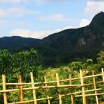 Kesasar di <b>Gununghalu</b>