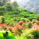 Taman Nasional <b>Kerinci</b>-Seblat
