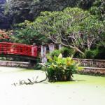 Hutan Di Tengah Kota <b>Bogor</b>