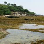 Pasir Pantai Ciantir <b>Sawarna</b>