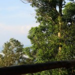 Di Atas Hutan Pinus <b>Dlingo</b>