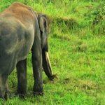 Bersama Sang <b>Nenek</b> Gajah